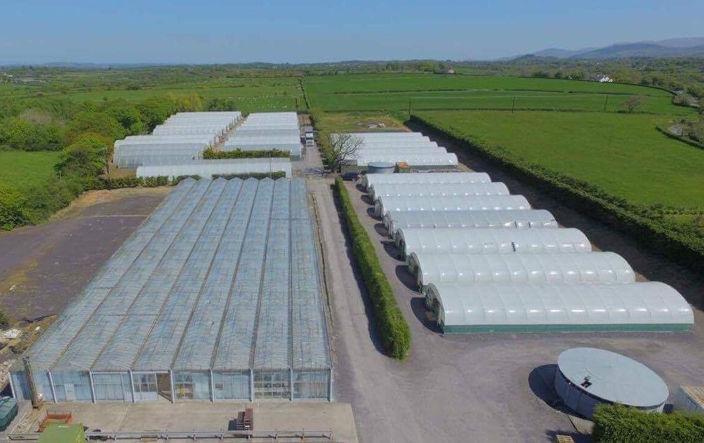 The Uk Ornamental Plant Market May Have Changed For Good Baileys Partners