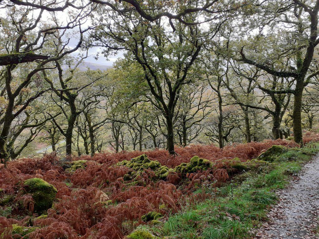 Natural Capital Assets: Restoring Ancient Woodlands