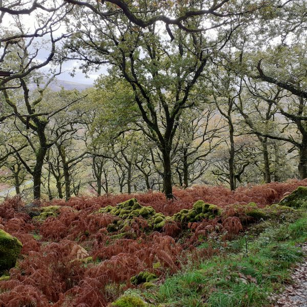 Natural Capital Assets: Restoring Ancient Woodlands