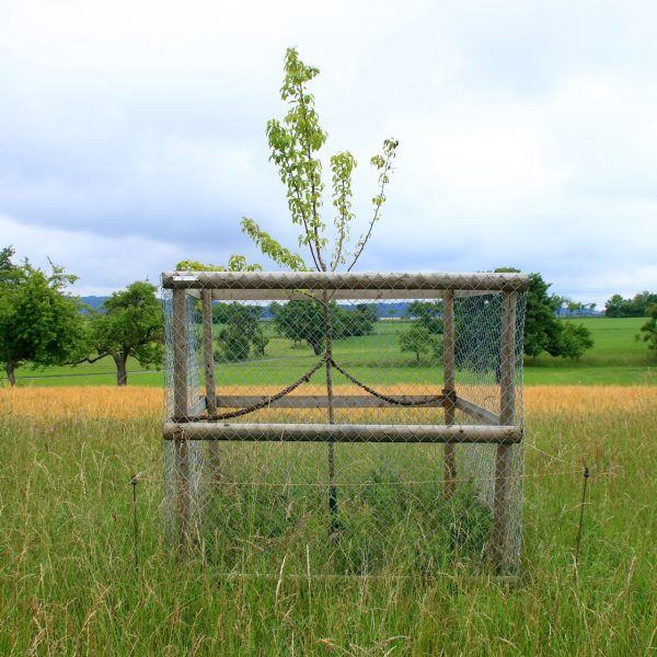 Natural Capital Assets: Trees, trees and more trees